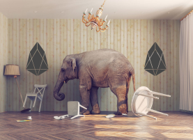 Image result for elephant in the room